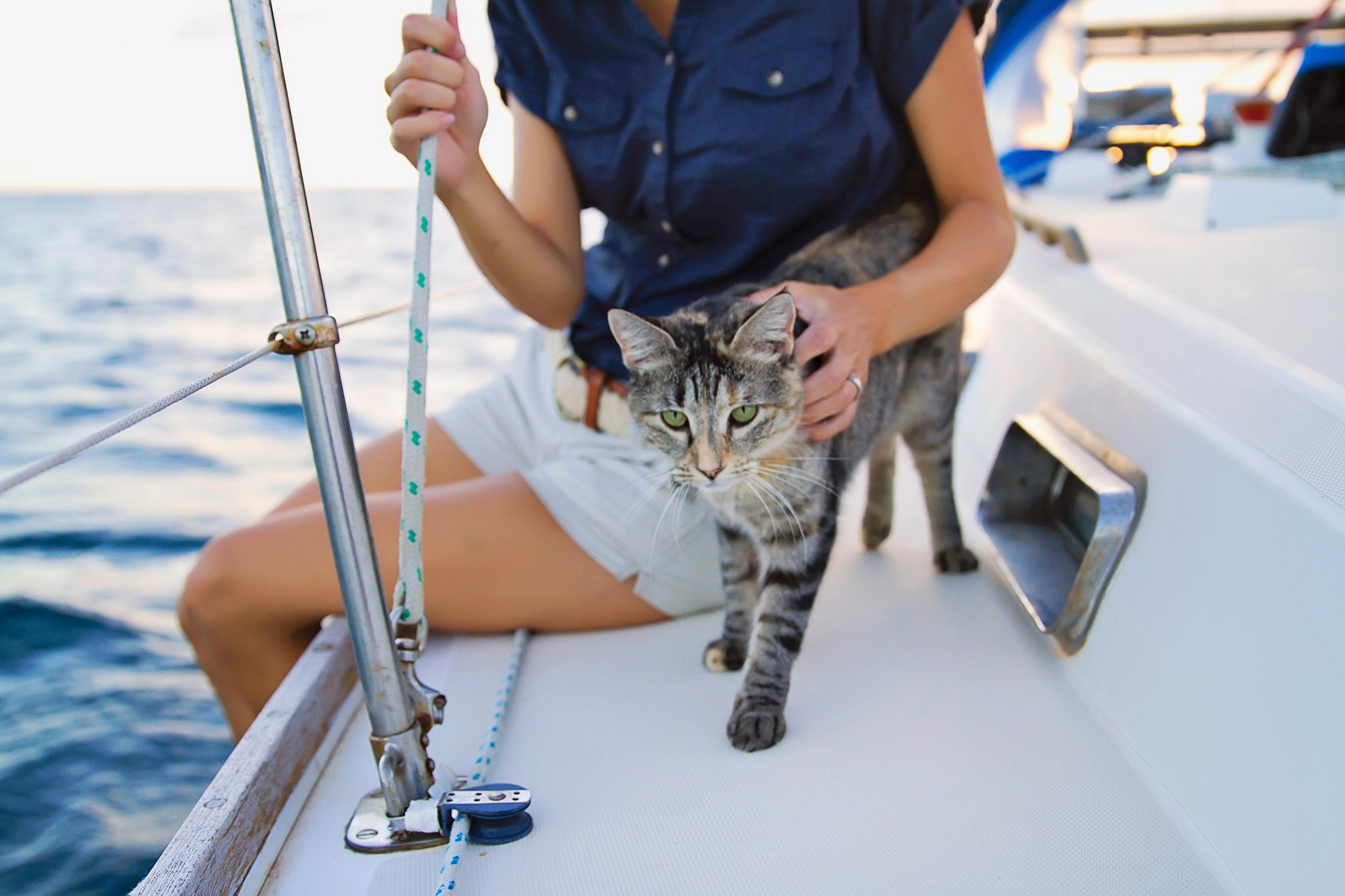 Animais a bordo. Dicas para cuidar do seu Pet.